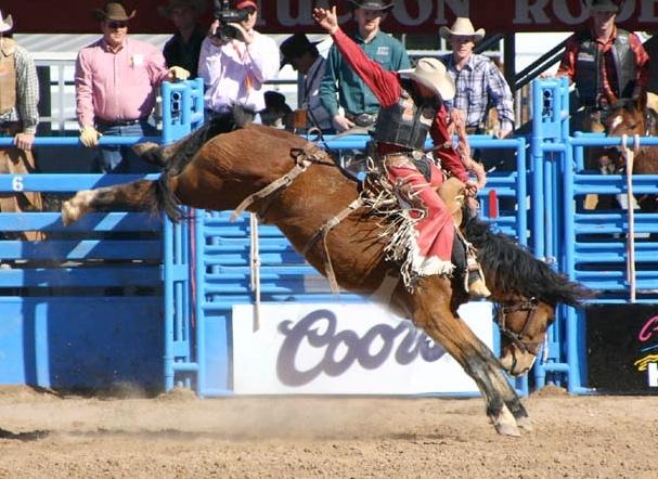 Un cowboy dans un rodéo